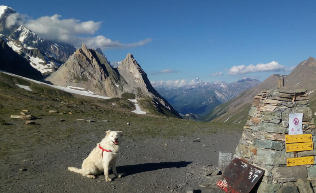What to Watch Out for on Mountain Tours With Your Dog